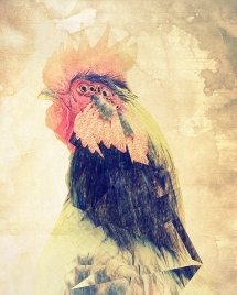 Animalia: Rooster