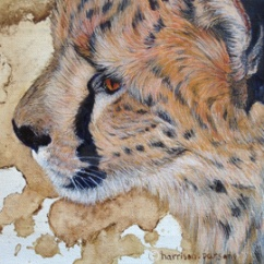 Black Tears Cheetah — oil