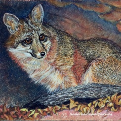 Little Shy Gray Fox — pastel