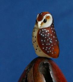 Bay owl