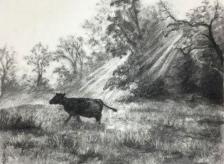 Cows, Morning Walk, Nimrod Hall, Virginia