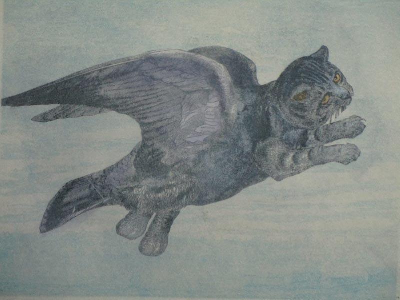 flyingcat-800pxw