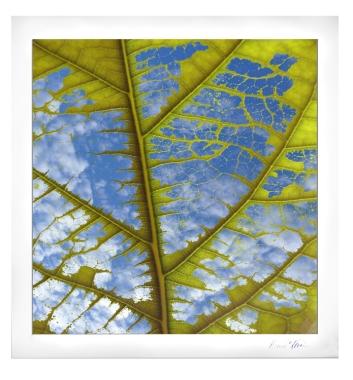 Leaf Full of Sky